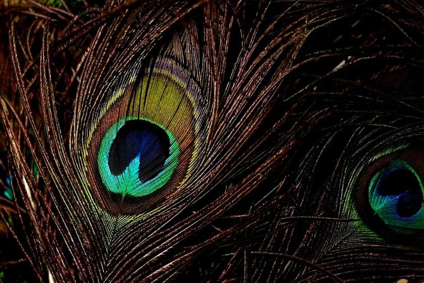 20090717post-eye