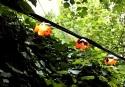 20090725post-buttercups