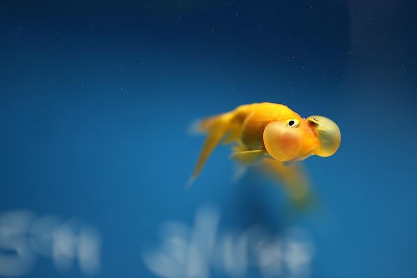 Swim yi ching lin photography for Fish cheeks nyc