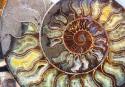 20121217post-nautilus-20121215_7554L