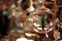 20121219post-tree-20121215_7427L