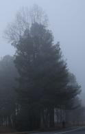 20121226post-walk-20121224_9015L