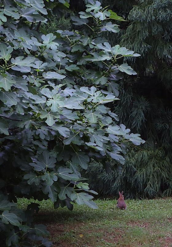 20130702post-backyard.companion-20130701_9208L