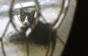 20140713post-watchcat-20140703_2277L
