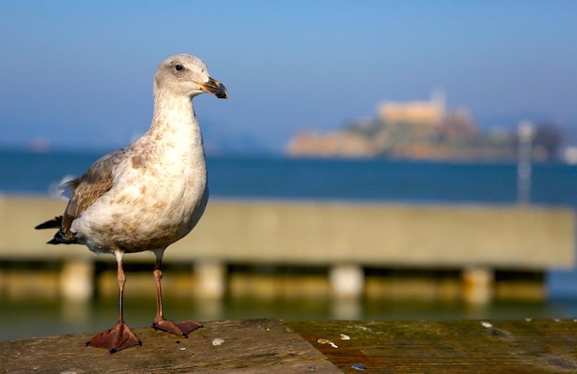 20150210post-alcatraz-20150102_0646L