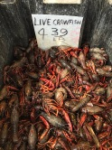 20150505post-live.crawfish-20150426_2440L