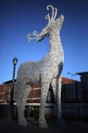 20151221post-reindeer-20141225_8411L