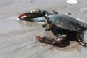 20161027post-crab-20120818_9929c