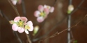 20170129post-plum-blossoms-20170129_4055l