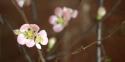 20170129post-plum-blossoms-20170129_4055l