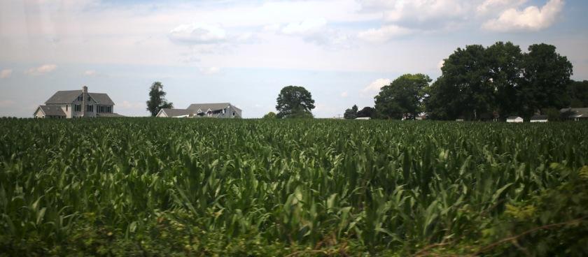 20170304post-cornfield-20140718_2884l