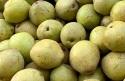 20210129post-apple.pears-20201024_7566L