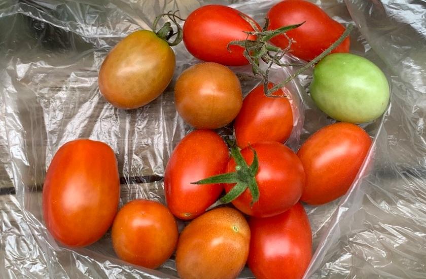 20210219post-ripening-20201024_7517L