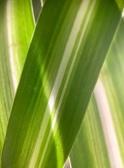 20210320post-green-20210306_5735L
