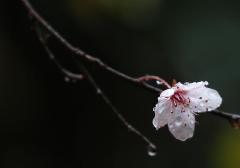 20210418post-spring.rain-20210411_1926L