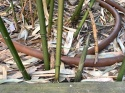 20210502post-bamboo-picking-20210501_8802L