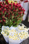 20210515post-bouquets-20210515_2733L