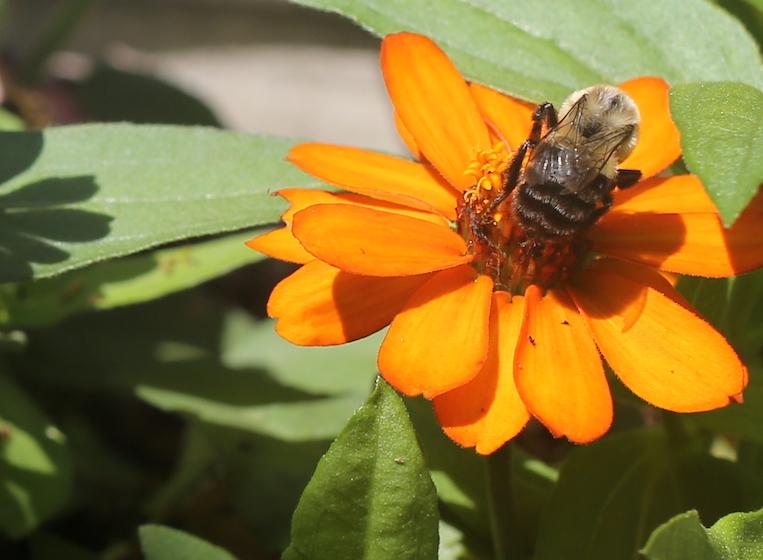 20210616post-pollinate-20210612_3785L