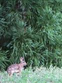 20210617post-bunny-20210613_4009L