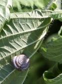20210822post-snail-20210819_8513L