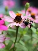 20210825post-bumblebee-20210820_8638L